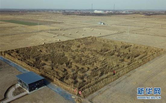 (社会)(2)挑战玉米秸秆迷宫